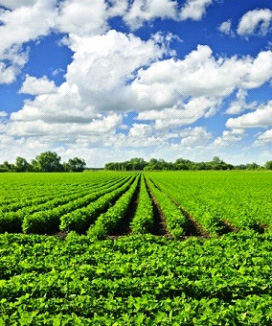 bio-based plant fields